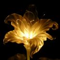 Chrysanthos