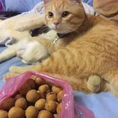 Do Do Cat